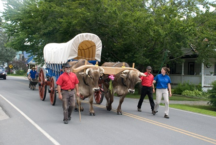 Heritage Oxen at the Roxbury Parade pulling the Calistoga Wagon